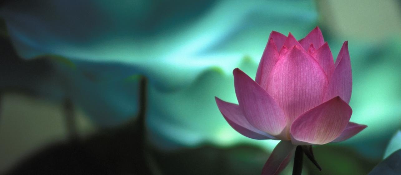 lotus-1260x5681
